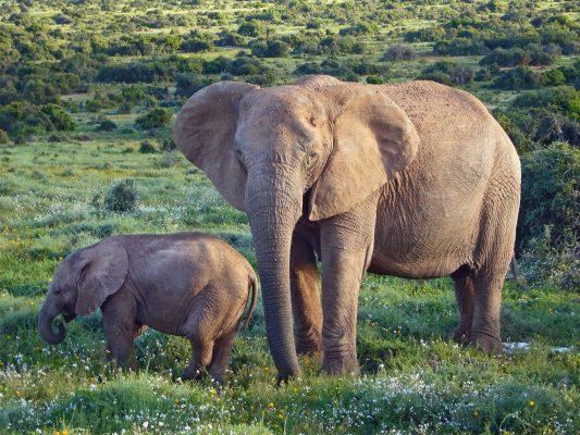 Elephant In Hindi
