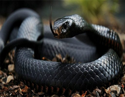 Snake Information In Hindi
